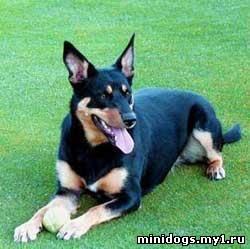 http://minidogs.my1.ru/_fr/0/0906478.jpg